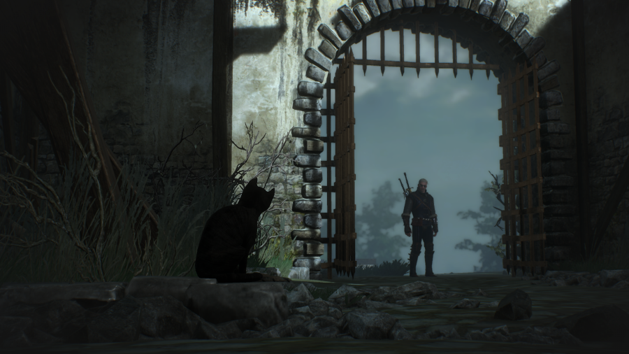 The Witcher 3 Wild Hunt Curious Cat